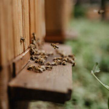 Pyłek pszczeli, a wzmacnianie odporności