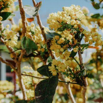 7 sposobów na pomaganie pszczołom